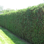 hedge-trimming-icon-ottawa-landscaping-masters